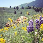 Exploring Montana's Backroads: Pryor Mountains, Big Ice Cave, Wildflowers, Chief Plenty Coups SP